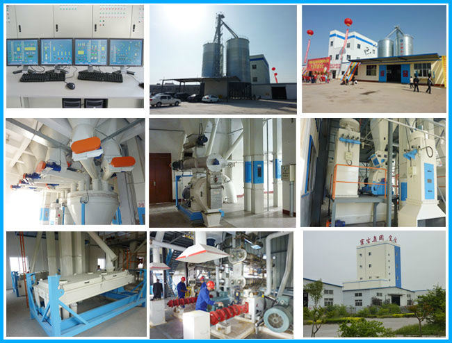 Forage Dryer for Pet/Fish/Animal Feed Factory