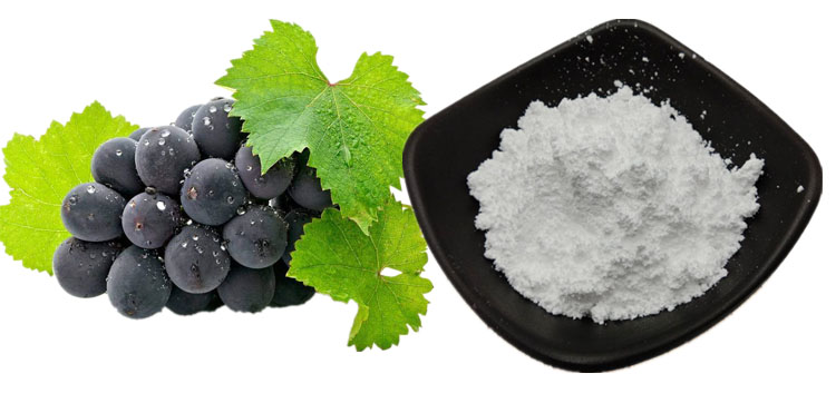 98% Resveratrol powder