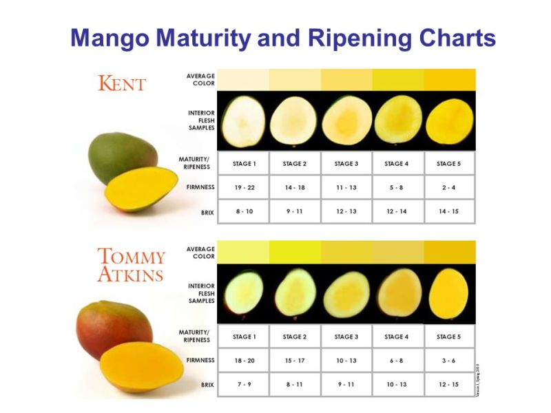 Hot Sale Mango Ethylene Ripener