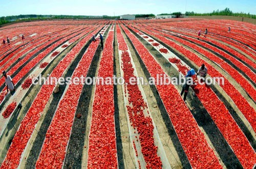 220 L Tomato Paste in Drum From Xinjiang 2016 New Crop 36-38%