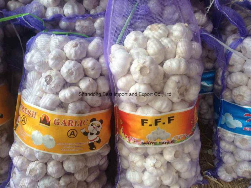 2016 New Fresh Pure White Garlic