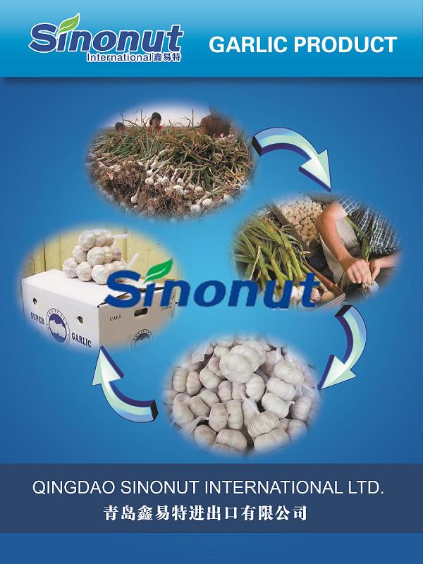 New Crop Jinxiang Garlic (3P)