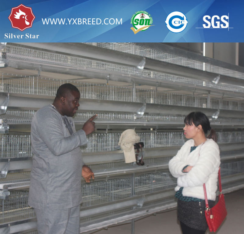 Chiken Hot Galvanized Wire Mesh Cage for