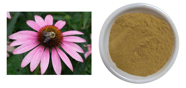 4% cichoric acid powder