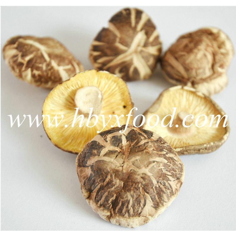 5-5.5cm Green Natural Deform Shiitake Mushroom