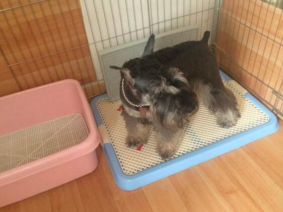 Pet Cleaning Dp-CS11596