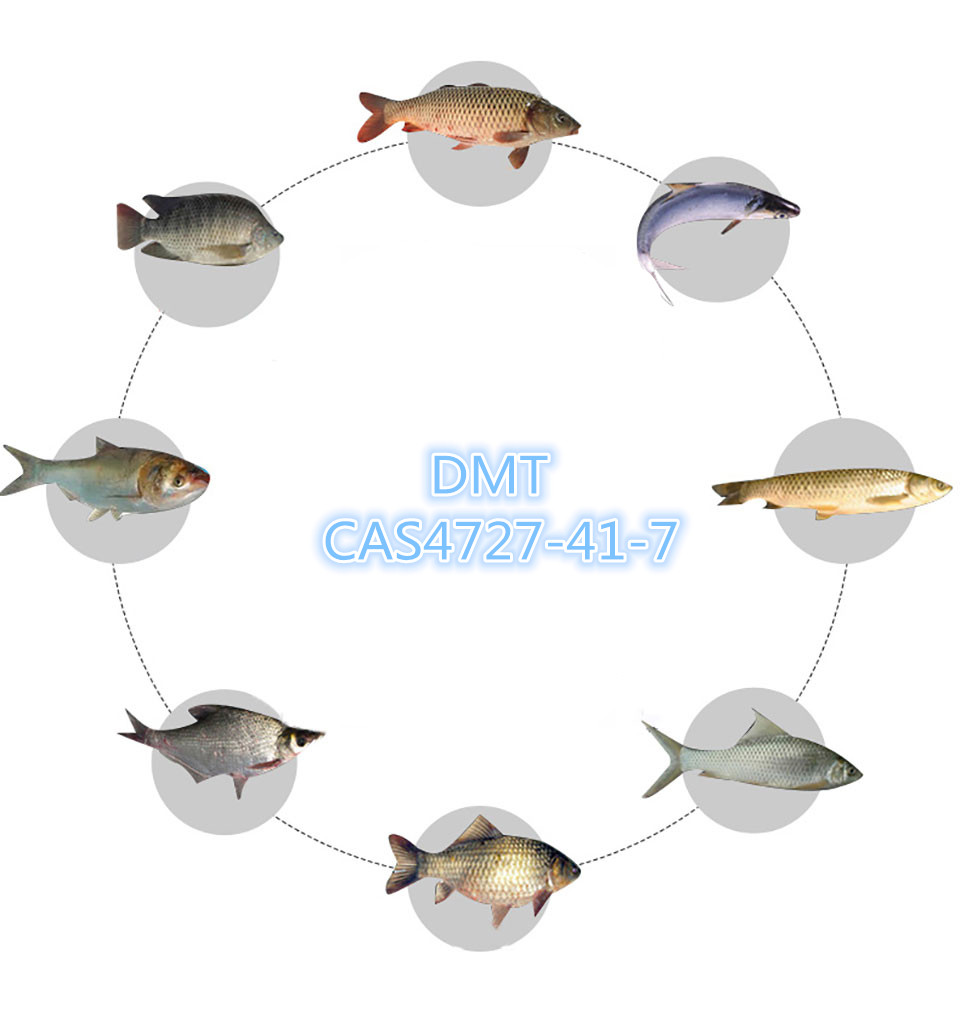 dmt fishing bait