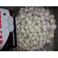 Fresh New Crop Pure White Garlic