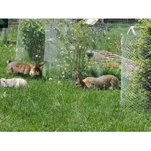 PVC Coated Hexagonal Wire Mesh For Rabbit
