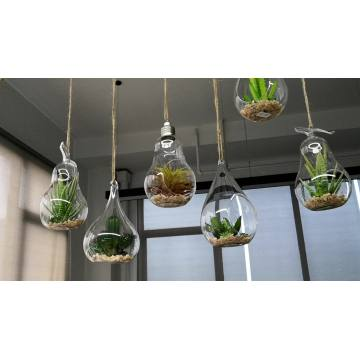 New style Hanging Glass Globe air plants terrarium