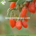 Factory Supply Bulk Nutrition Dried Fruit Goji Berry