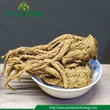 GMP standards Angelica Sinensis /Dong Quai Root