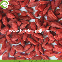Factory Hot For Sale Dried Fruit Wolfberries