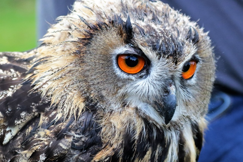 owl and other birds population decline