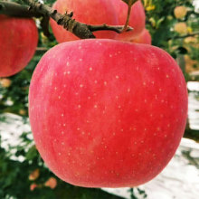 Pack 12 red selenium apples