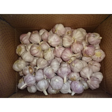 Hot Sale Normal Fresh Garlic