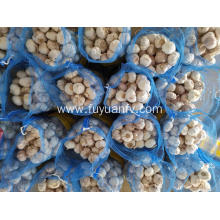 fresh 2019 new crop high quality garlic