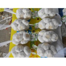 China for Fresh Pure White Garlic pure white garlic 4.5cm export to Kiribati Exporter