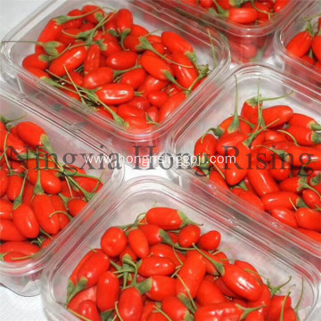 Antioxident organic goji berries wild wolfberries