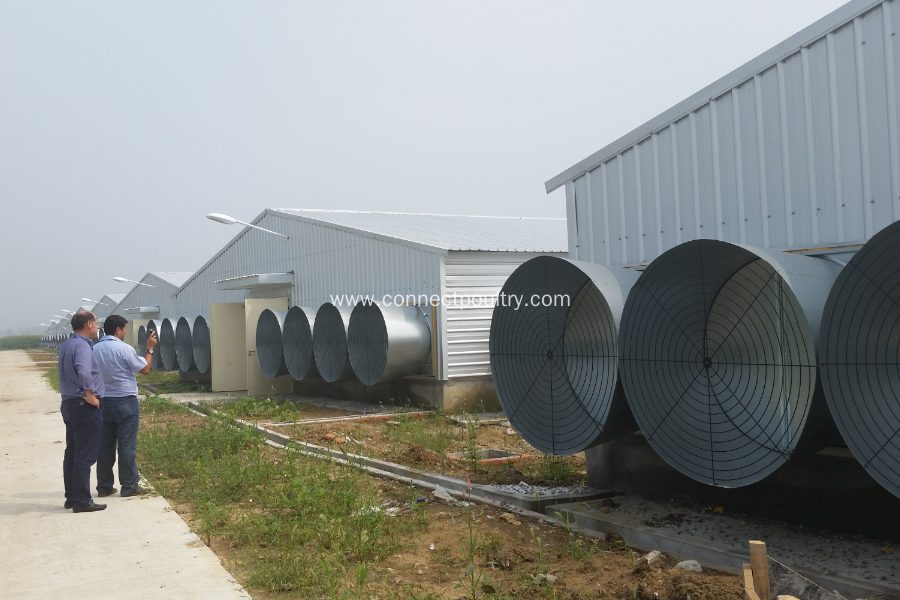 Poultry automatic farming equipment