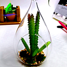 transparent glass bubble round shape Hanging Glass Terrarium