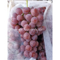 BINCHUAN GRAPES ARE STARTING