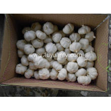 best jinxiang fresh garlic