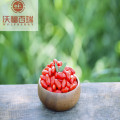 Goji berry/ Wolfberry /Certified goji berries