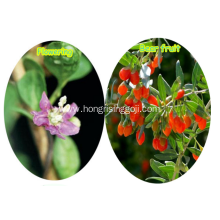 Cosmetic Diet Wolfberry Goji Berry