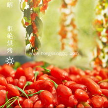 High Quality Lower price Goji Berry