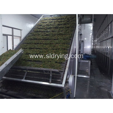 20 Years manufacturer for Food Single Layer Belt Dryer Special vegetables dryer equipment supply to Vietnam Supplier