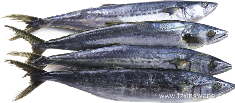 Sea Frozen Spanish Mackerel 150-750g