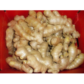 Shandong Air dried ginger