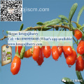 Hot selling GOJI wolfberry SUPPLY Premium Quality