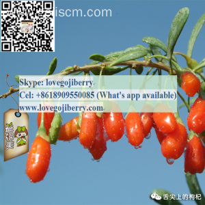 HEALTHY CARE PRODUCT CHINESE ORIGIN GOJI TEA