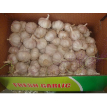 Good Normal White Garlic Packed In 10kg carton