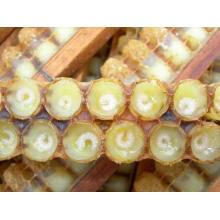 Customized for Best Royal Jelly, Natural Royal Jelly, Healthy Royal Jelly, Organic Fresh Royal Jelly Manufacturer in China Hot sale Fresh Royal Jelly export to Pakistan Importers