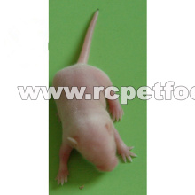 Frozen mice new design for reptiles food