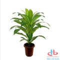 Artificial Plants In Mini Planter Pots For Decor