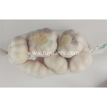 High Quality for Frozen Garlic High quality normal white garlic supply to Vanuatu Exporter