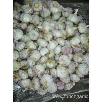 2019 New Season Fresh Garlic