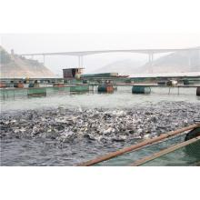 Best Price for for Aquatic Feed Additives High Purity Aquatic Attractant Fish Bait TMAO export to Saint Kitts and Nevis Suppliers