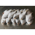 Whole Round Frozen Pomfret