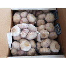 normal white garlic from jinxiang 2019