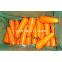 Wholesale organic fresh carrot price