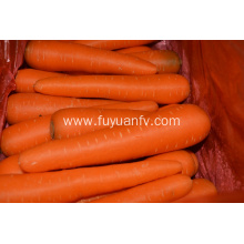 Fresh yellow carrot 2019 new crop