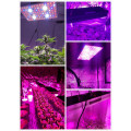 Cob Diy Full Spectrum Plant Led Grow Light