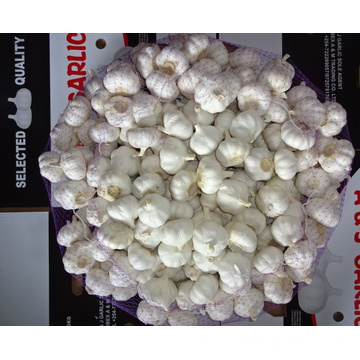 New Fresh Pure White Garlic