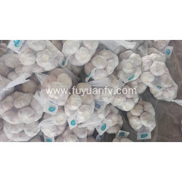 Professinal Exporter for Fresh pure white garlic