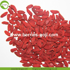 Factory Supply Fruit Natural Best Quality Goji Berries